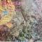 The Byrds – Колибри - лучшие песни группы БЕРДЗ